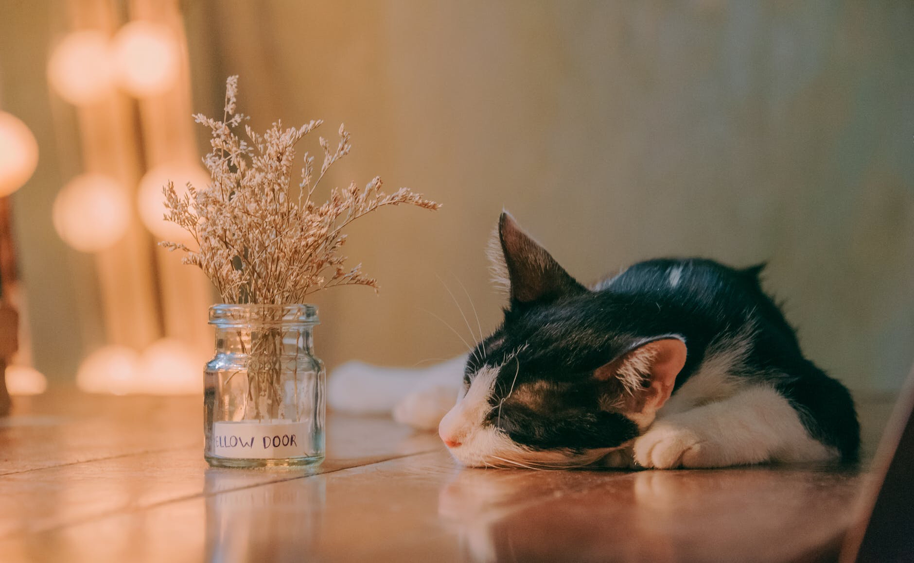 Black and white cat asleep on a table with a vase of small white flowers